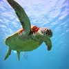 Puzzles Turtle